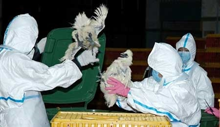 鳥インフルが人へ感染 日本領事館が注意喚起