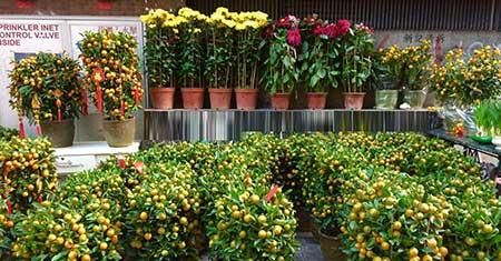 香港の風習、フラワーマーケットを楽しもう!