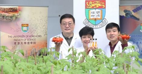 香港大学が老化防止(若返り)トマトを開発