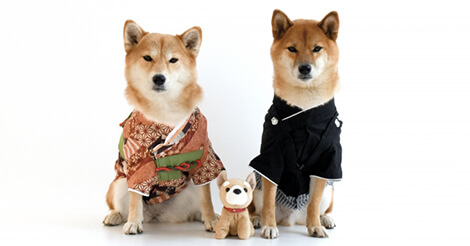 香港居民の好きな犬種1位は「柴犬」