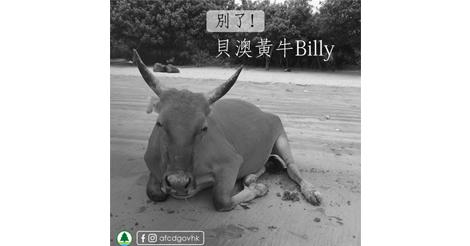死亡した野良牛の胃から大量のビニール袋が確認