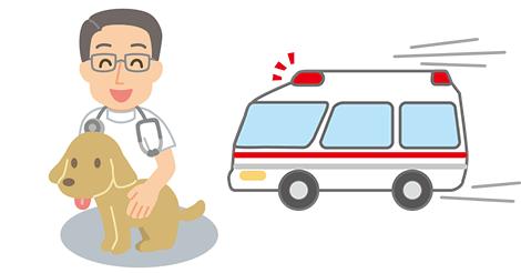 香港初のペット救急車が3月1日よりスタート